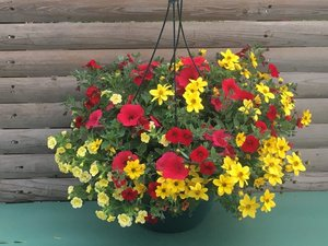 Fire In The Sky combo Hanging Basket (c12)